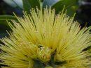 クアナ・トレス・カヘレの「Lehua Beauty(レフア・ビューティー)」レフアの美しさを讃えるハワイアン・ソング