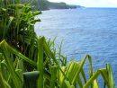 「Lei Hala(レイ・ハラ)」ハラのレイに、ハワイ人としての想いを込めたハワイアン・ソング