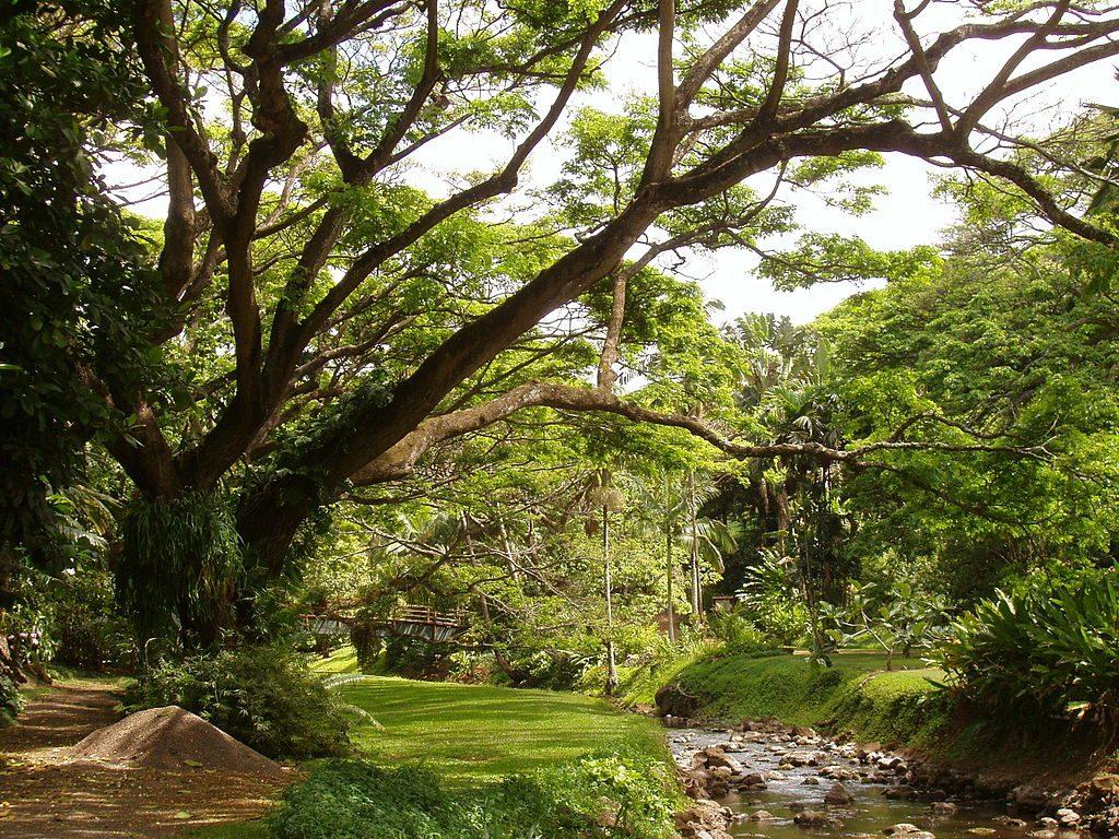 ハワイ カウアイ島 マクブライド・ガーデン