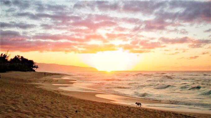 「ハワイ アロハ」の画像検索結果