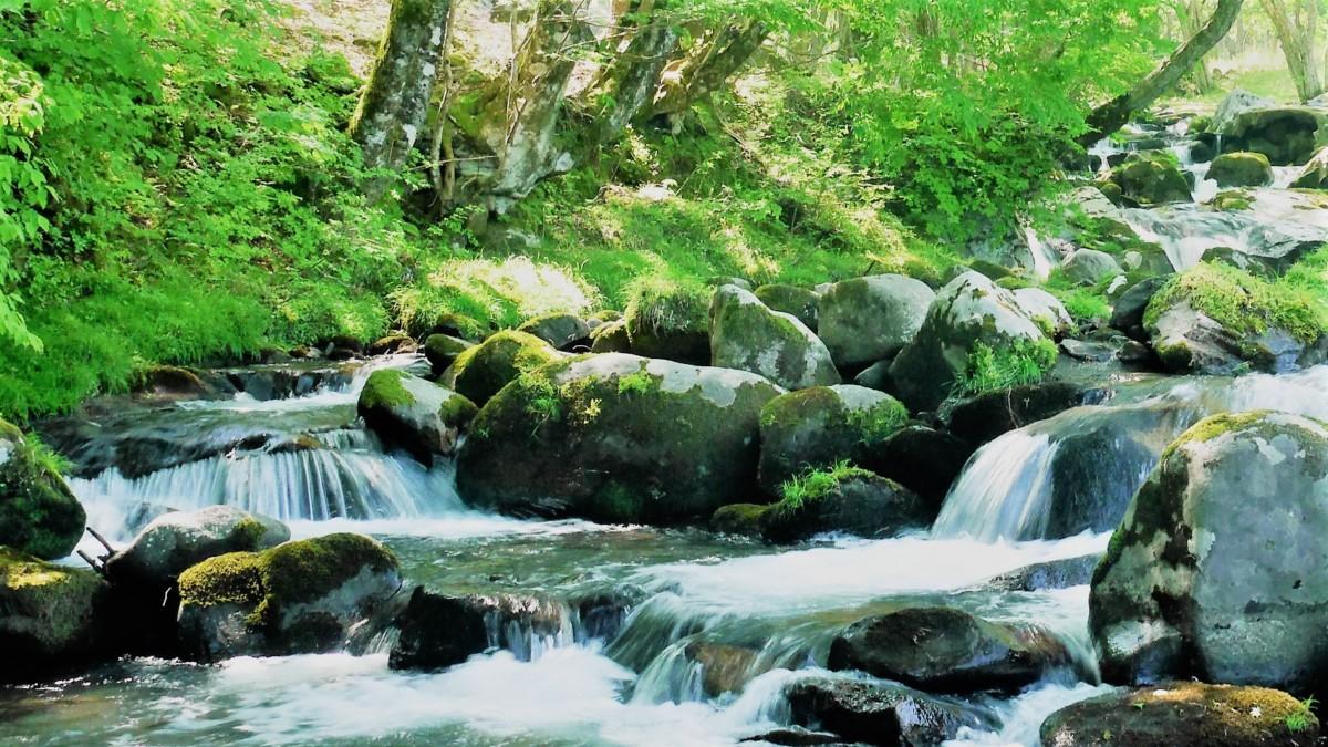瀬をはやみ岩にせかるる滝川のわれても末にあはむとぞ思ふ 百人一首 崇徳院