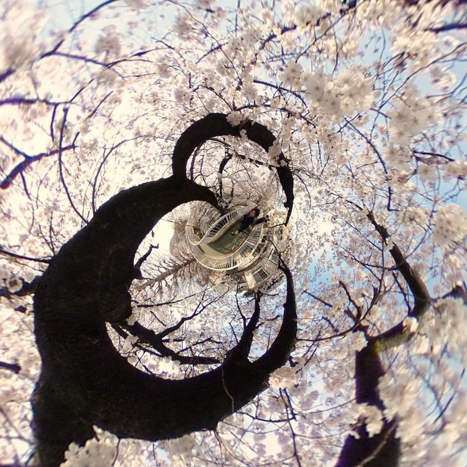 桜 360度写真