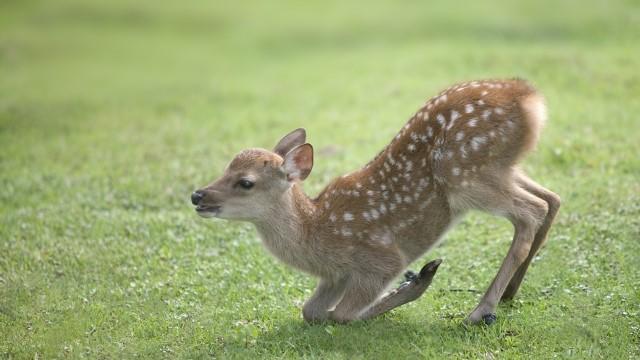 小鹿ちゃん2