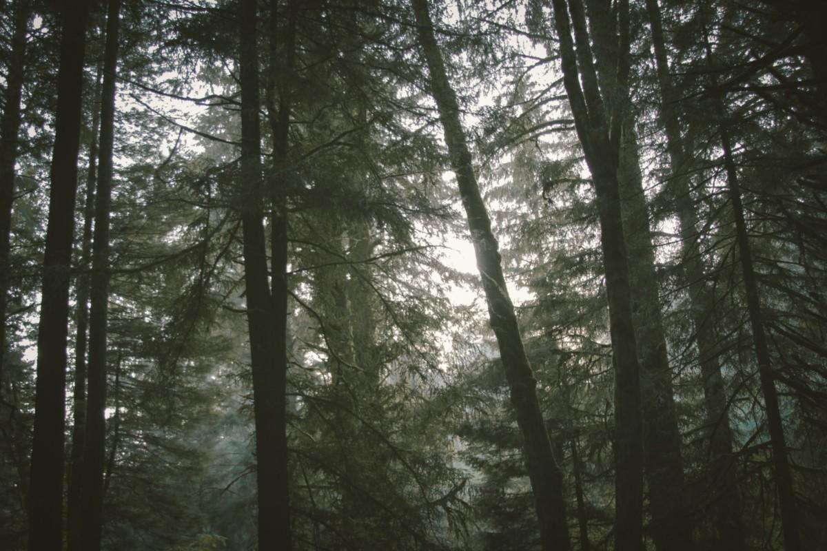 ラストノートの余韻は森の静けさのよう