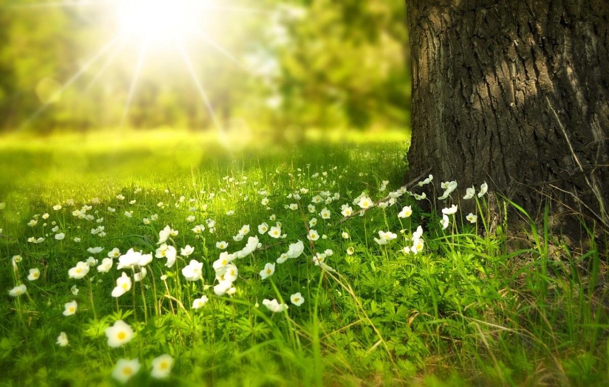 マヤ暦の新年 春 スタート