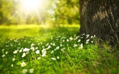 マヤ暦で幸せになるためのヒントをゲットしよう!~新しい260日サイクルのスタートにやっておきたいこととは?