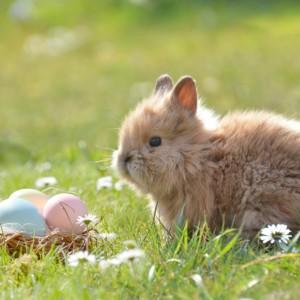 イースター ウサギ イースターバニー