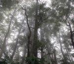 『Uhiwai(ウヒヴァイ)』優しく包む深い霧を描いたハワイアン・ソング