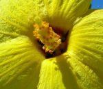 ハワイの8つの島々を象徴する8つの花たち、フラダンスに込められたそれぞれのストーリーが素敵!!