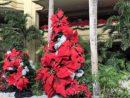 「Mele Kalikimaka(メレ・カリキマカ)」 ヤシの木が風にそよぐハワイのクリスマス・ソング